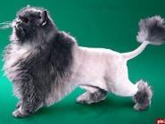 Стрижка кошек (2).jpg
