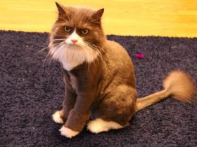 Стрижка кошек (3).jpg